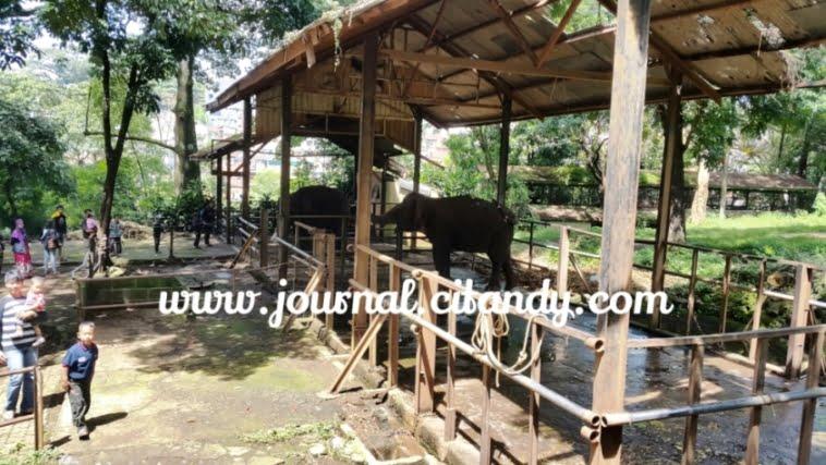 Gajah Kebun Binatang Bandung