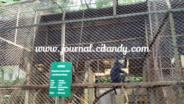 Jalan jalan ke Kebun Binatang Bandung