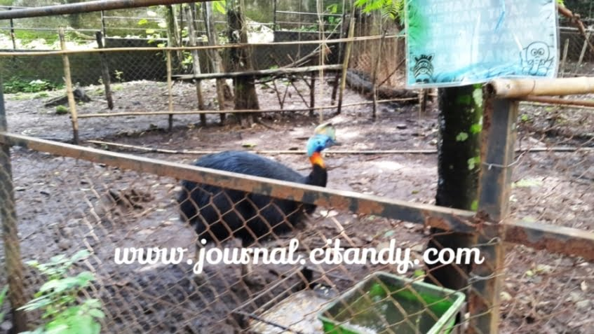 Mengunjungi Kebun Binatang Bandung