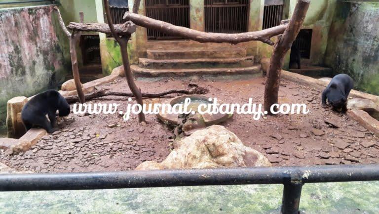 Wisata ke Kebun Binatang Bandung