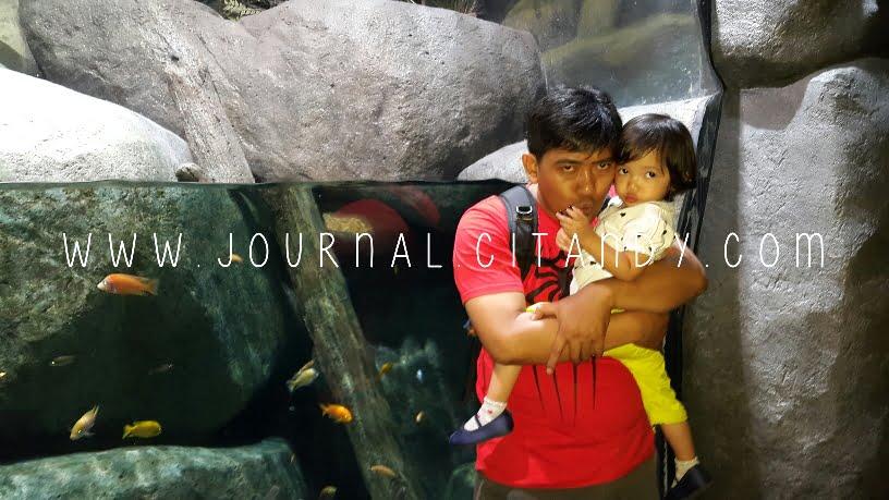Berkunjung ke SEA Aquarium Singapore 2016