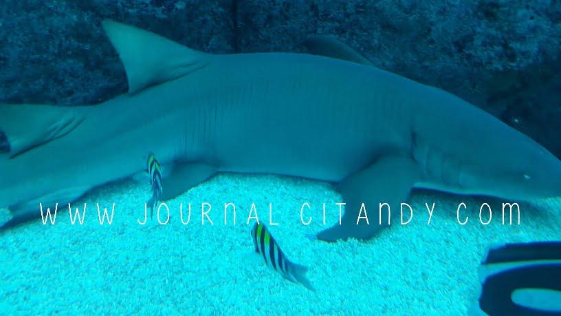 Koleksi hewan laut SEA Singapura 2016