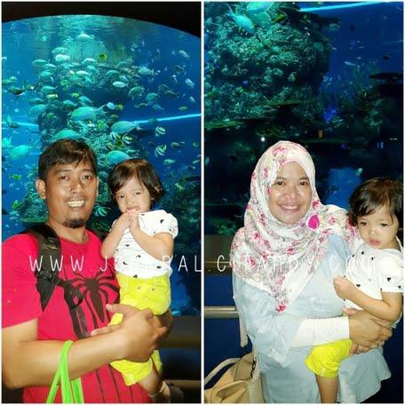 Wisata ke Singapura dengan Anak SEA Aquarium 2016